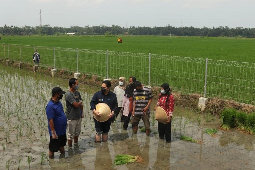 Menteri BUMN, Erick Thohir Puji Kolaborasi BUMN Untuk Bangun Ketahanan Pangan dan Wirausaha Petani